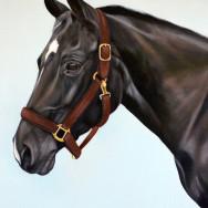 Halle, Oil Paint on Canvas, 16″x20″