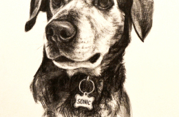 Sonic, Charcoal Drawing, 9″x12″