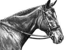 Bob, Charcoal Drawing, 9″x12″
