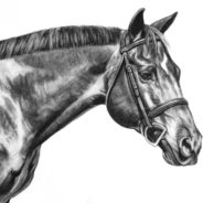 Shaq, Charcoal Drawing, 16″x20″