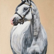 Grey Pony, Oil Painting, 8″x10″