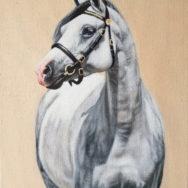Grey Pony, Oil Painting, 8″x10″
