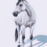 Greymeadow's Abracadabra, Oil Painting, 18″x24″